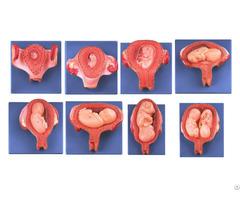 Jy A6137 Embryonic Development