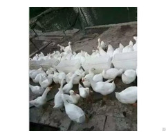 Duck Feeder Plastic Food Container