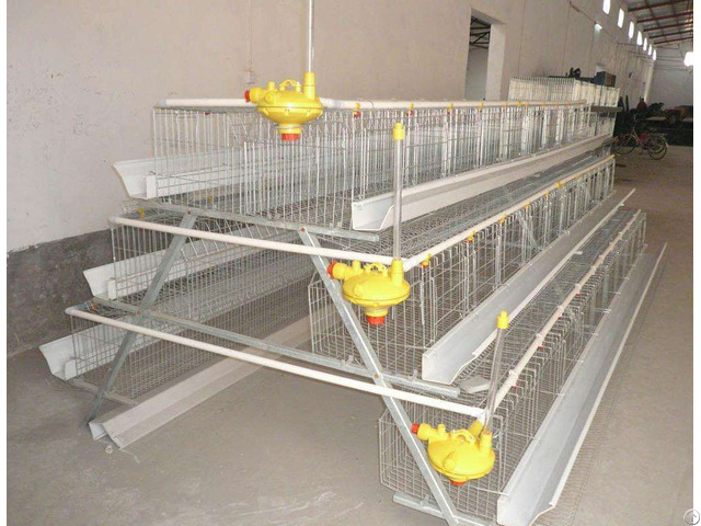 A Type Automatic Chicken Duck Cages