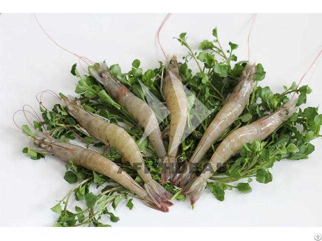 Vannamei Shrimp Afishdeal