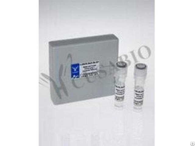Fcgr3 Antibody Fitc Conjugated