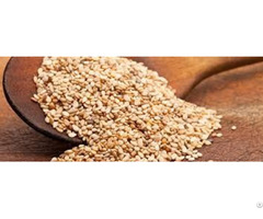 Sesame Seed Eco