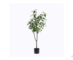 Fake Tea Olive Tree