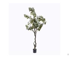 Fake Punica Granatum Tree