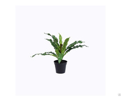 Artificial Bird S Nest Fern