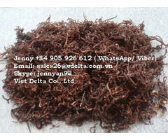 Dried Earthworm For Animals Jenny 84 905 926 612