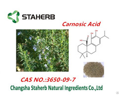 Rosemary Extract Powder Rosmarinic Acid