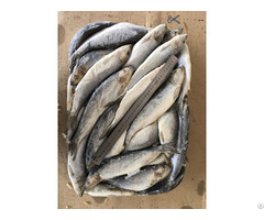 Baltic Herring Sprat Smelt