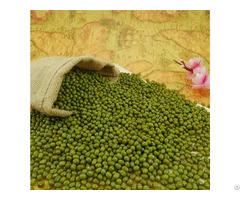 Organic Green Mung Beans