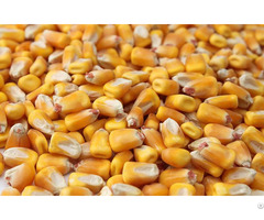 Quality Grade Yellow Corn