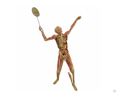 Play Badminton Plastinates Of The Human Body