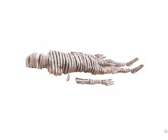 Human Horizontal Slices Of Whole Body Sheet Plastination