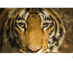 Pench National Park Tour Packages