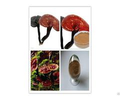 Ganoderma Lucidum Extract Solvent Extraction
