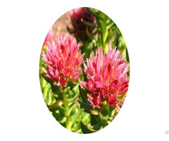 Rhodiola Extract Solvent Extraction