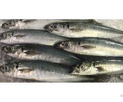 Frozen Round Scad Fish Omega Seafood