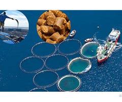 Why Choose Floating Fish Feed Machine