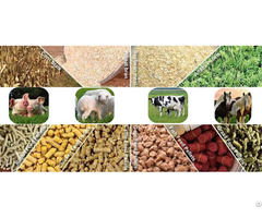 Why Choose Feed Pellets For Your Poultry