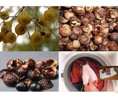Pure Soapnuts Organic Soap Nuts Liquid