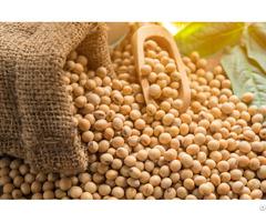 Soy Beans Vietdelta