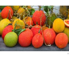 Vietnam Gac Fruit Oil Momordica Pulp
