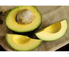 Organic Fresh Avocado Fruit