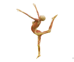 Dance Lady Body Plastination