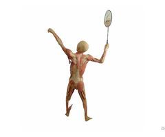 Play Badminton Plastinated Specimens