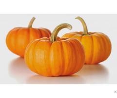 Fresh Pumpkin High Quality