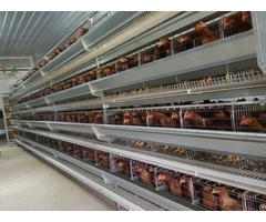 Hot Galvanized Automatic Chicken Cage Poultry Farm House Design