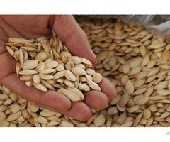 Quality Dried Pumpkin Seeds