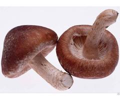 Coriolus Versicolor Extract Health Supplement