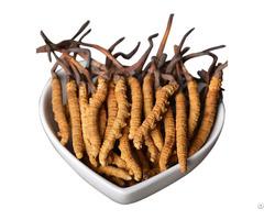Cordyceps Sinensis Mycelium Health Supplement