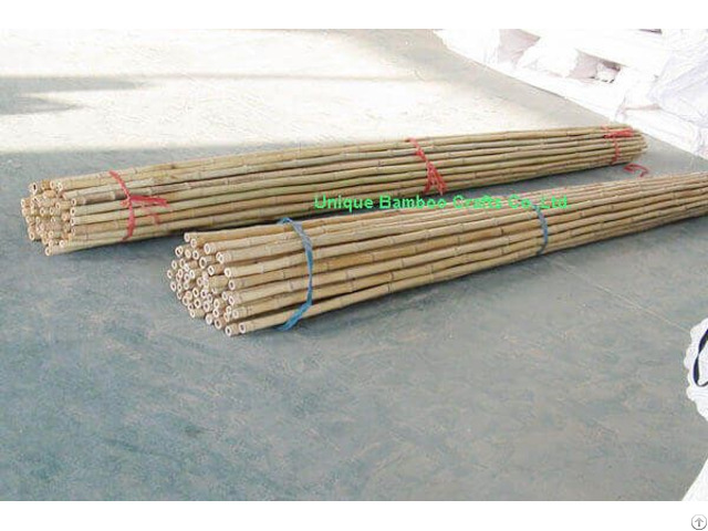 Dry Bamboo Canes For Farm And Garden Plant Supporting