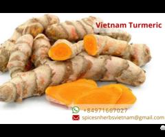Fresh Turmeric Vietnam