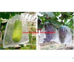 Insect Net Bag