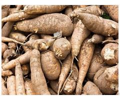 Fresh Cassava In Viet Nam