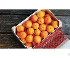 Mandarin Fruits For Sale