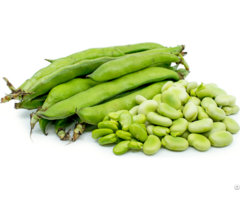 Fava Beans For Sale