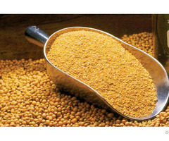 Soybean Meal For Sale