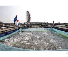 Catfish Feed Pellets Production Process