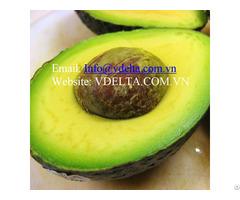 Avocado High Quanlity