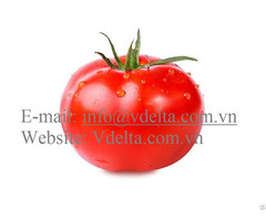 Fresh Tomatoes High Quality