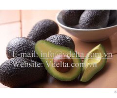 High Quality Hass Avocado From Viet Nam
