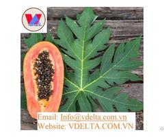 High Grade Papaya Leaf