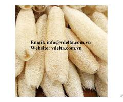 Best Price Luffa From Vietnam