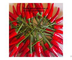 Vietnam Fresh Red Hot Chilli