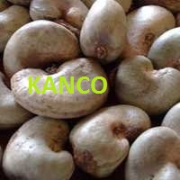 Required Raw Cashew Nuts In Shell