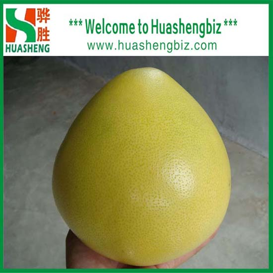 2013 Chinese New Crop Honey Pomelo With Excellent Quality