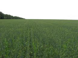 Agricultural Land For Sale Farm